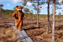 My Video / Teddy Bear at Leivonmäki National Park, Joutsa, Finland