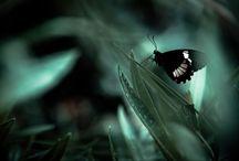Butterflies... <3<3<3