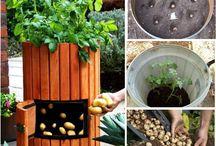 Bahçe bitki yetiştiriciliği