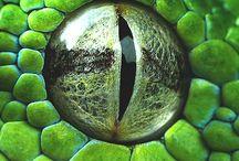 Глаза рептилий