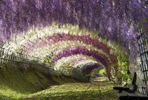 Stunning Images from Ashikaga Flower Park, Japan