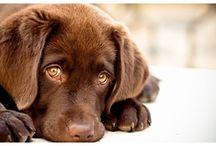 Nevelés / Mindent a jól nevelt kutyákért! Tanácsok, módszerek, ötletek.