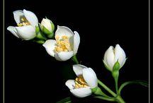 цветы идеи