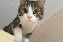 Filuś / Meine Katze!
