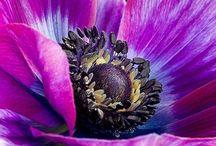 3. Blumen Acryl & Öl