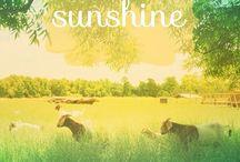 Sunshine > 3