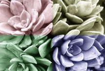 ~succulents~