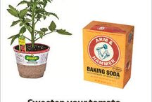 Tomatoes baking powder