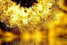Golden mood