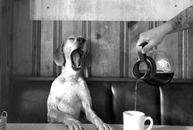 Cafe Dogs / Dogs in cafés