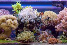 Reef Tank / Aquarium Récifal / by Loïc Choury