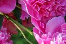 Flowers ♧♣
