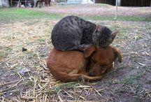 cute pets / by Virginia Hert