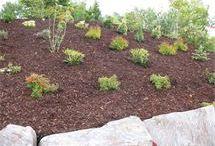 Planter i skråning