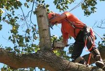 Affordable Tree Care 10- 50% Off