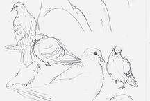 line-sketches