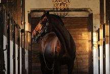 Equestrian Dreams / Horses, horses and more horses.