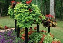 Border Columns / Imagine these colorful Border Column displays in your garden this year! Group columns of different heights together to create eye-catching floral displays in borders, lawns and flower beds.
