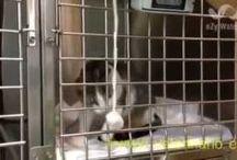 VIDEOS DE GATOS / Videos de gatos a su paso por la clínica. Centre Veterinari de Cornellà