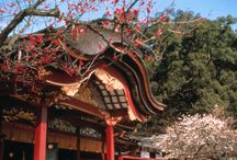 Japan / Let yourself be enchanted by the wonders of Japan