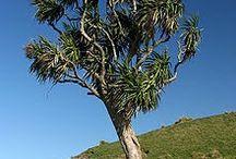 NZ Edible Plants