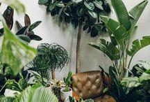 Urban Jungle <3