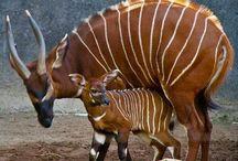 Animal + baby love