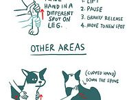 Helpful Dog Hints / A collection of helpful infographics and hacks to improve your relationship with your dog.