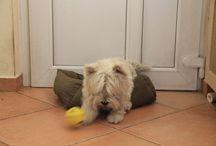 My lovely dog / Her name's Lulu