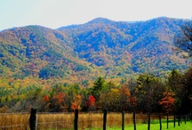 My Photography / Photos I have taken while in Gatlinburg, TN. along with other photos