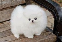 Cute! Puppy love