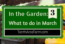 Spring Gardening Tips / Spring is upon us and it's time to get digging!