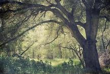Trees  / by Mara Merrill-Andrews
