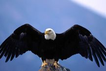 Eagles...and our other favorite animals too!