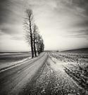 Photo Master:  Hakan Strand