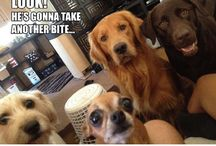 All Dogs. All The Time! / by Jacko The Dog