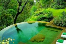 natural pools / research on creating a natural pool