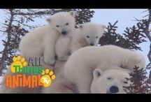 Polar Themed Activities
