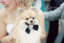 Weddings - Incorporating Pets / Ideas and inspiration for including your pets in your wedding, bridal shower, anniversary, vow renewal, or other special event or party. #incorporating #pets #pet #wedding #ideas #inspiration #dog #dogs #cat #cats #horse #photos