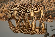 Discover - Africa / Find out the destinations on our African Safari