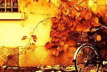 Fall / Inspiracje jesienne Solar