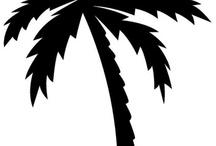 Palm Trees / by Janie Wilson