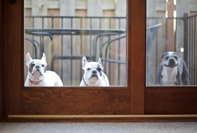 Looking through  windows and doors / Animals that love to see in or out....