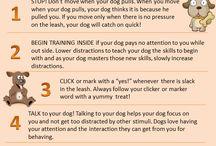 Dog Training and stuff