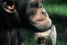 scimmiette simpatiche