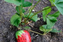 gardening ideas\tips