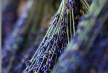 Lavender / by Lynne & Gail