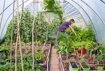 Polytunnel Ideas