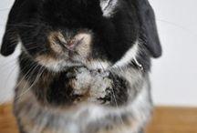 Bunnys! / Bunnys...