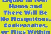 insect spray diy
